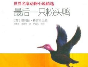 《最后一只粉头鸭》读后感600字【精选】
