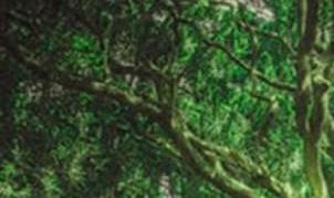 《木偶的森林》读后感【15篇】