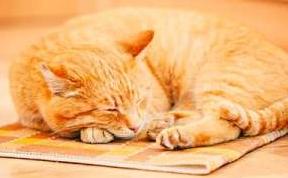 一只躲雨的丑小猫读后感