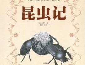 昆虫记读后感(合集10篇)