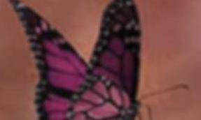 你若盛开,蝴蝶自来读后感