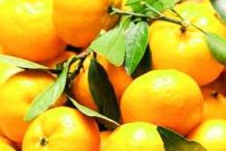 《橘子味的夏天》读后感