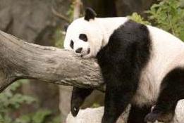 功夫熊猫3观后感